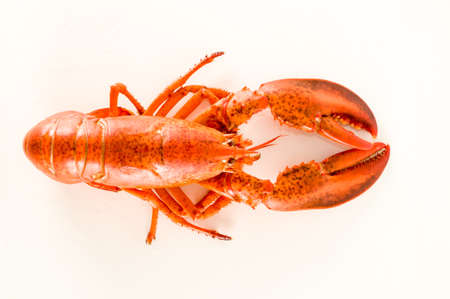 Delicious freshly steamed lobster