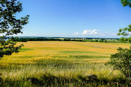 landscape with yellow field and blue sky, in Sweden Scandinavia North Europe