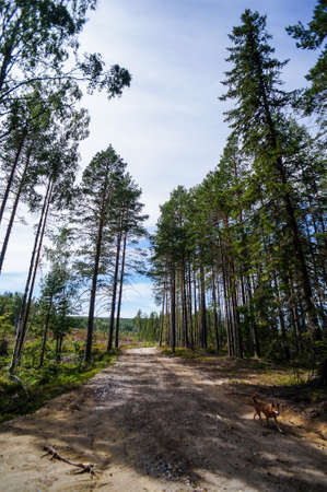 road in forest, in Norway Scandinavia North Europe Stockfoto