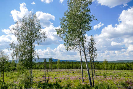 landscape with trees and blue sky, in Norway Scandinavia North Europe , taken in nordkapp, europe