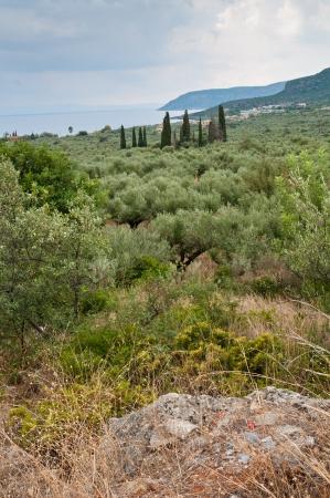 kalamata: Landscape views of Kalamata.