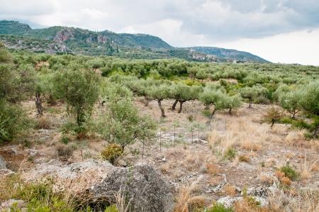 landsape: Landsape views of Kalamata