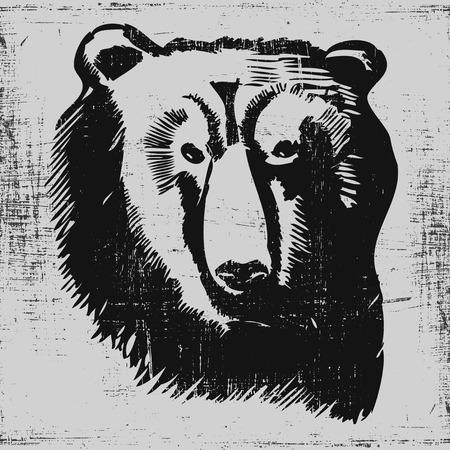 bear head hand drawn sketch grunge texture engraving style. Vector