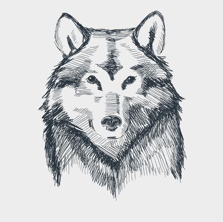 lobo feroz: Lobo cabeza grunge dibujado a mano ilustración vectorial boceto. Vectores