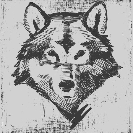 eye drawing: Wolf head hand drawn sketch grunge texture engraving style. Illustration