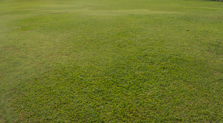campo calcio: Dell'erba verde della natura texture di sfondo.