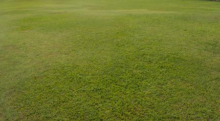 terrain de foot: Green grass texture de fond la nature.