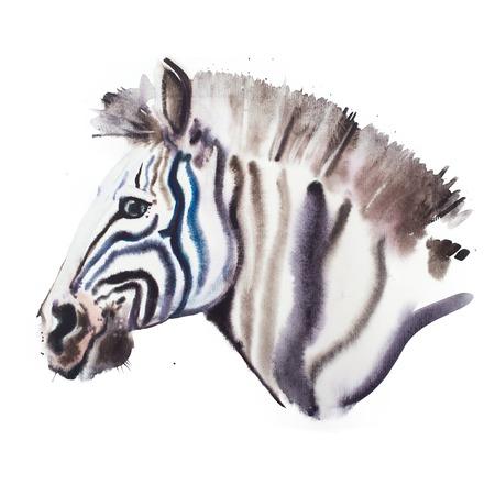 wet shirt: Hand drawn watercolor illustration portrait of zebra. Stock Photo