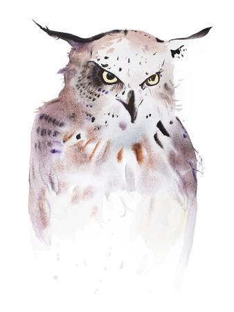 birds eye view: Hand drawn watercolor illustration portrait of owl. Stock Photo