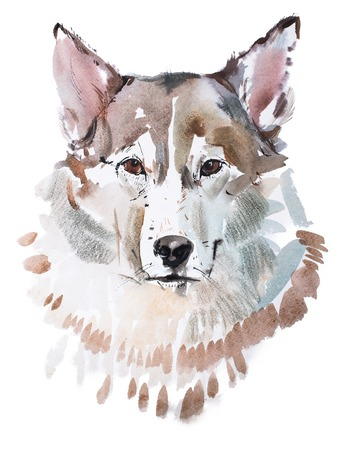 painted face: aquarelle painting of grey dog head, wolfs face watercolor drawing.