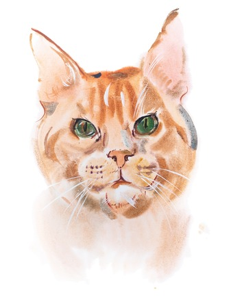 furry: watercolor painting, red-headed curious watching furry cat aquarelle drawing.