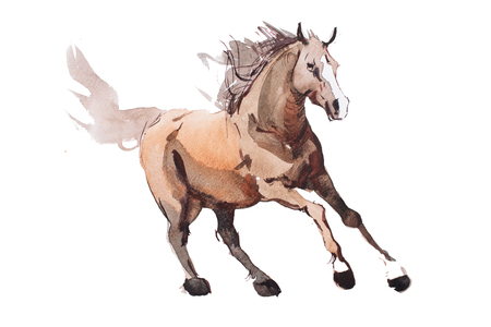 galloping: watercolor painting of galloping horse, free running mustang aquarelle.
