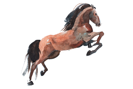 watercolor painting of rearing up horse, brown mustang getting on legs aquarelle drawing.