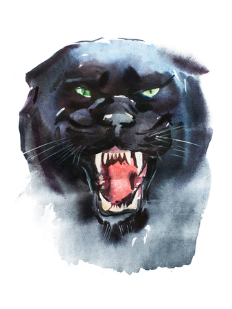 Watercolor drawing of angry looking panther. Animal portrait on white background Stock Photo