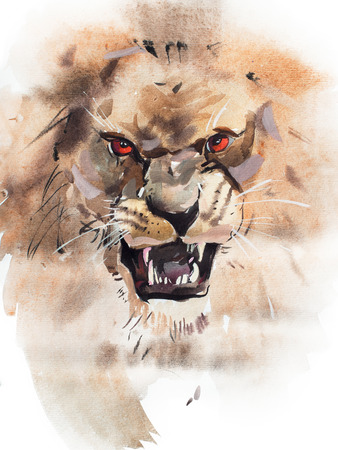 Watercolor drawing of angry looking lion. Animal portrait on white background