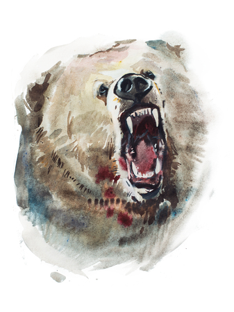 Watercolor drawing of angry looking bear. Animal portrait on white background