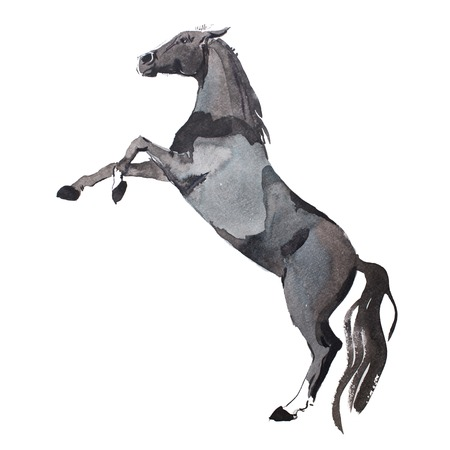 rearing: watercolor painting of rearing up horse, brown mustang getting on legs aquarelle drawing.