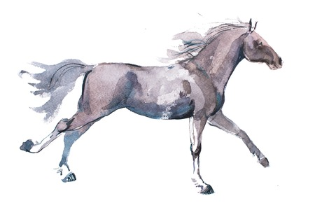 watercolor drawing of jogging horse, young mustang doing dogtrot aquarelle painting. Stock Photo