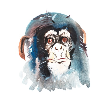 pan paniscus: Watercolor portrait of grey furry monkey. Aquarelle drawing 2016 symbol. Stock Photo