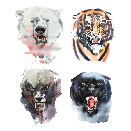 Watercolor drawing of angry looking bear, tiger, wolf and panther. Animal portrait on white background