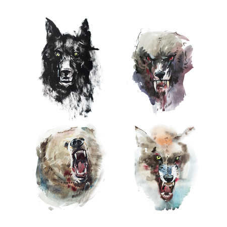 Watercolor drawing of angry looking wolfs and bear. Animal portrait on white background. Stock Photo