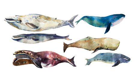 Watercolor whales Hand drawn illustration on white. Stock Photo