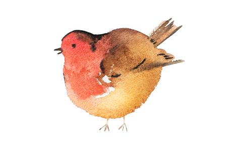 Blue bird hand drawn watercolor aquarelle illustration. Stock Photo