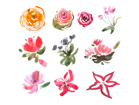 fresh flowers: Watercolor drawing of summer meadow fresh flowers aquarelle painting