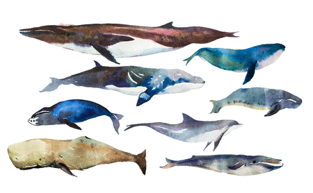 Watercolor whales Hand drawn illustration on white. Фото со стока