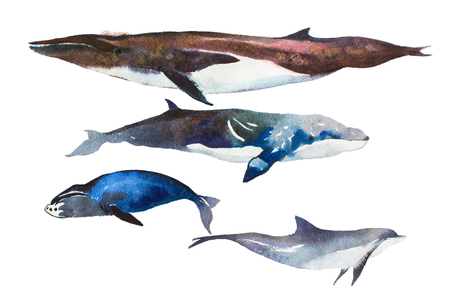 Watercolor whales Hand drawn illustration on white