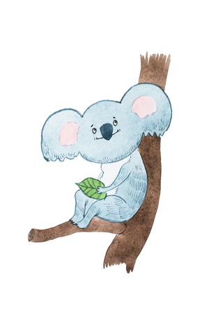 Aquarelle drawing of dreamy cartoon koala bear holding a leave sitting on a tree branch