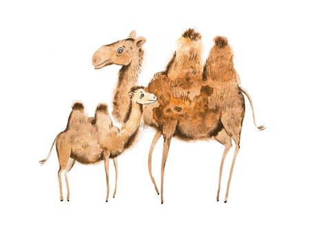 Handmade illustration of camel mother and calf Stock Photo