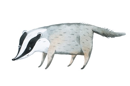 Hand drawn with watercolor badger Aquarelle illustration