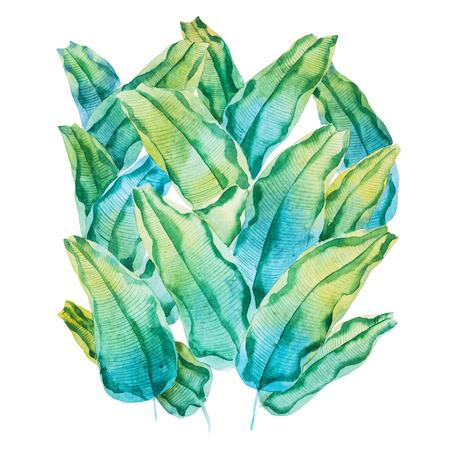 Pittura ad acquerello di foglie tropicali verdi. Modello fatto a mano di waringin Ficus benjamina disegnato su carta bianca Archivio Fotografico - 82660955