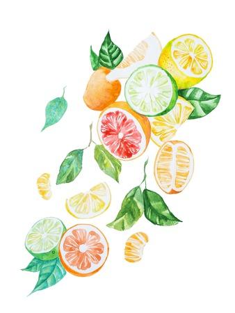 흰 종이에 수채화로 그려진 나뭇잎과 감귤류 믹스의 손으로 그린 그림 스톡 콘텐츠