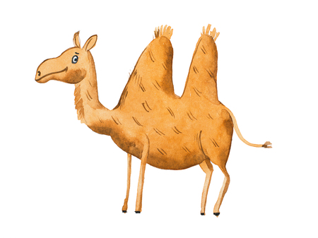 Hand drawn illustration of kind camel Watercolor