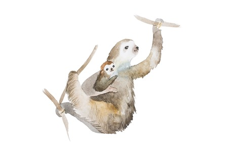 Aquarelle drawing of mother sloth and a baby hanging on tree branches, hand painted illustration