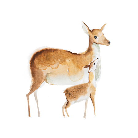 Watercolor drawing of mother deer and a fawn Stock Photo