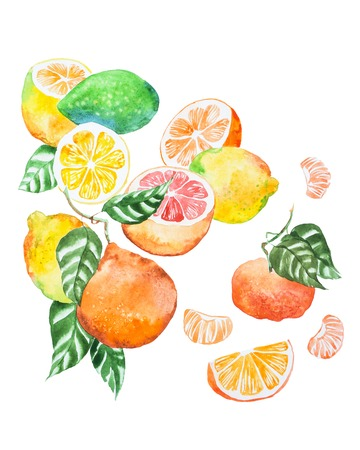 Hand-painted illustration of citrus mix with leaves drawn with watercolour on white paper Standard-Bild - 97201530