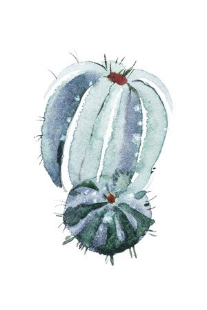 Watercolor hand drawn spiky cactus bloom flower Imagens - 101659626
