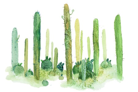 Watercolor hand drawn spiky cactus isolated on white Stock Photo