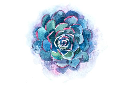 Cactus succulent aloe plant flower watercolor illustration.