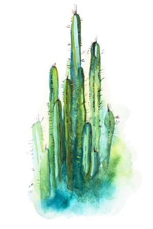 Watercolor hand drawn spiky cactus isolated on white 版權商用圖片