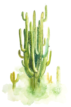 Watercolor hand drawn spiky cactus isolated on white Imagens