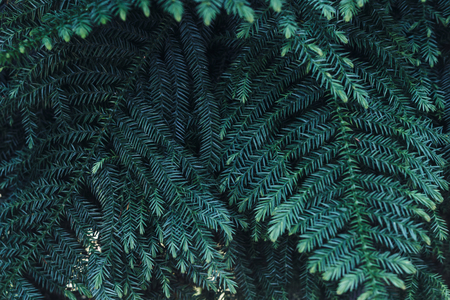 Green leaves background. Natural tropical background nature forest jungle foliage 写真素材
