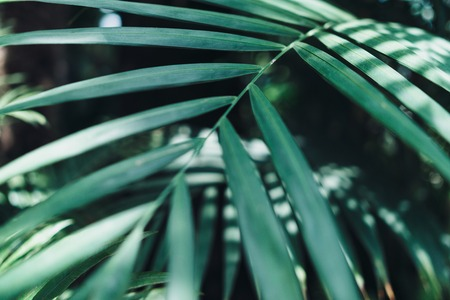 Green leaves background. Natural tropical background nature forest jungle foliage Imagens