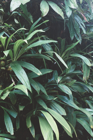 Green leaves background. Natural tropical background nature forest jungle foliage. Imagens