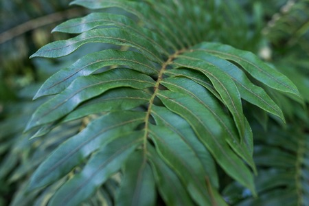 Green leaves background. Natural tropical background nature forest jungle foliage. Stock Photo