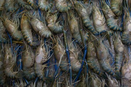 Macrobrachium rosenbergii palaemonid, giant river prawn or giant freshwater shrimp