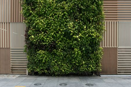 Natural brown wooden pattern texture and vertical green wall background. Banco de Imagens